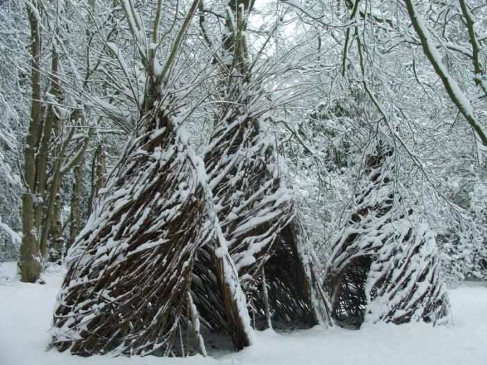 Willow wigwams in the snow