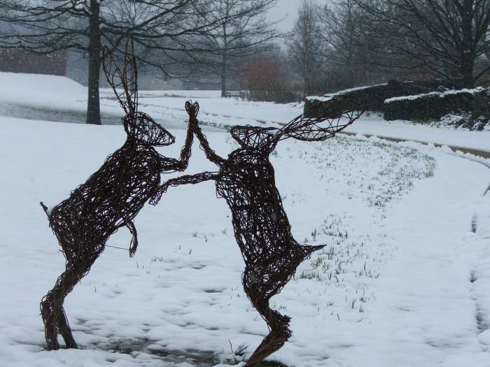 Dancing hares in the snow